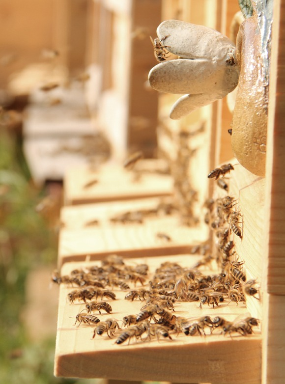 Bee-Family Bienenhaus