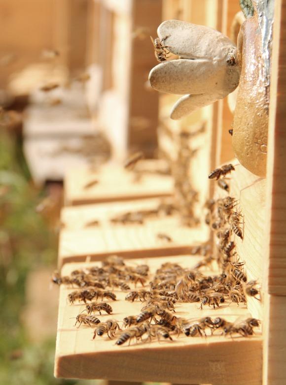 Bee-Family Bienenhaus